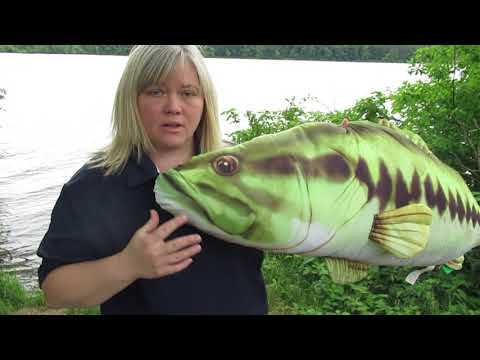 01- What Makes A Fish A Fish