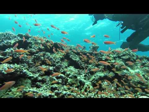 月刊ダイバー9月号から始まった、松嶋初音さんのExplorer体験リポート。第1回の石垣の海の様子をムービーでお届けします!