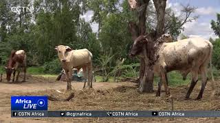 Nigerien government ropes in different players to boost agriculture