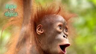 Смешные Животные Удивились не на Шутку! Интересное Смешное Видео!