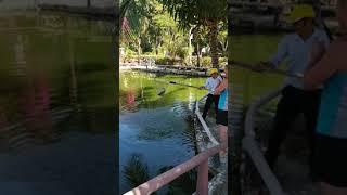 Рыбалка Вьетнам Сом Супер