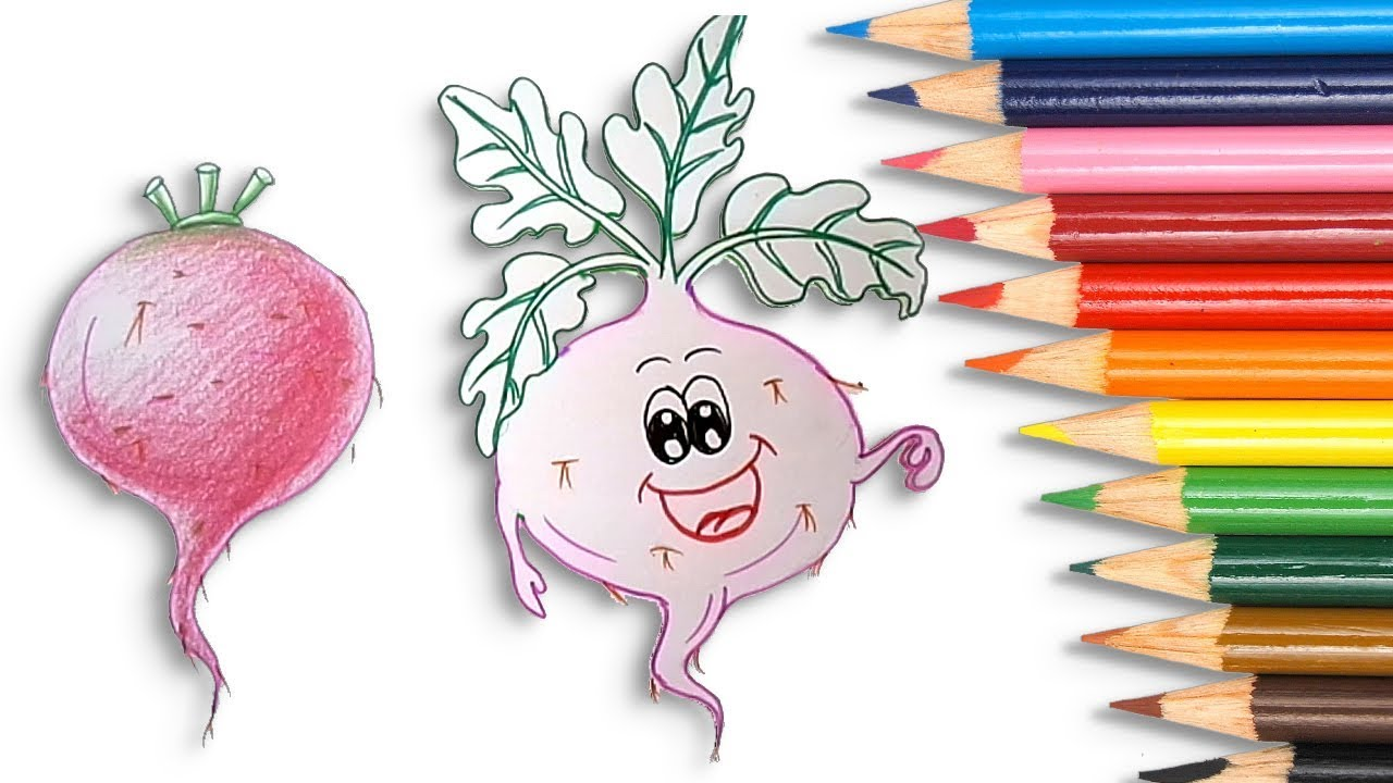 How To Draw A Beetroot Simple And Easy Step By Step How To Draw