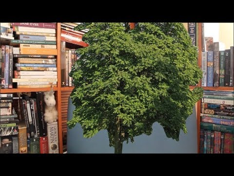 a-tree-grows-in-brooklyn:-book-review