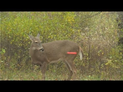 CNTV-Doe Killing Crossbows