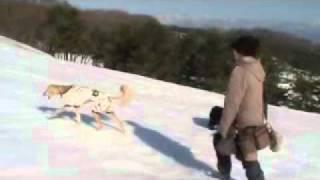 雪の広場を皆でまったり~のんびり~と歩きました♪ 山々も綺麗です こん...