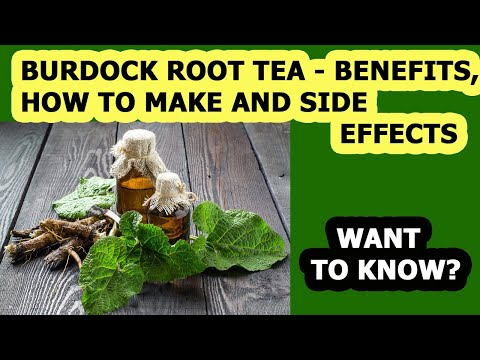 Burdock Root Tea Benefits, How To Make and Side Effects