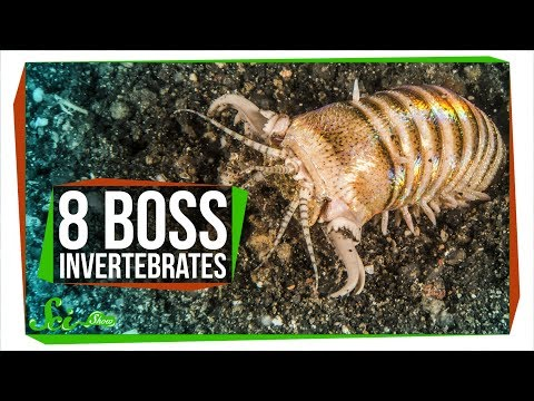 8 Boss Invertebrates That Eat Whatever They Want