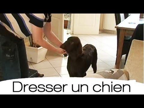 Comment apprendre efficacement le rappel à son chien