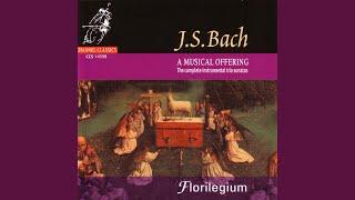 Trio Sonata in C Major BWV 1037: Alla breve (Allegro moderato)