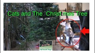 🐈🎄 CUTE and FUNNY! Cats and The Christmas Tree... 🐈🎄