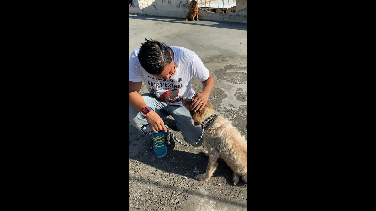 Andaba en la calle junto a su amiga cieguita hasta que fueron rescatados