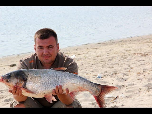 рыбалка в волгодонске осенью