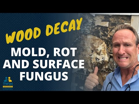Wood Decay, Rot And Surface Fungi