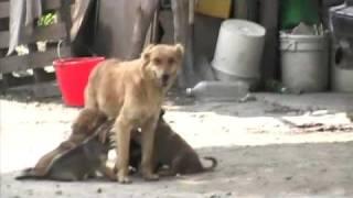 Perros callejeros: hijos de quién sabe quién...