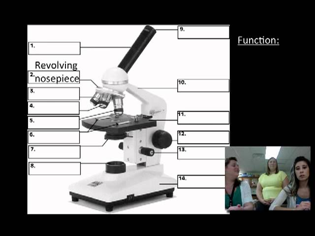 012 microscope parts and functions lessons tes teach microscope parts and functions ccuart Images
