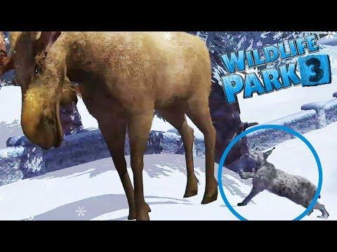 TINY LYNX HUNTS DOWN A MOOSE!    Wildlife Park 3 : Alaska - Part 3