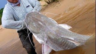Pescaria de Piraiba Gigante - 2,01m - Laulau Fishing #1