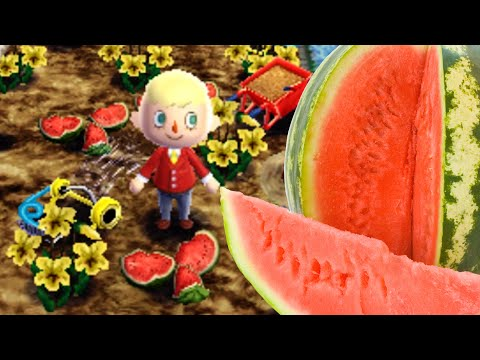 Animal Crossing Journal - Watermelon Farms