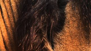 HVOB - Lion [Stil vor Talent]