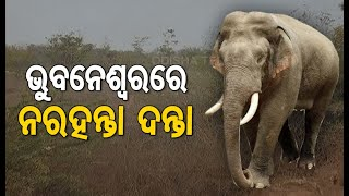 Lone Elephant Which Killed 4 Persons In Pipili Enters Bhubaneswar