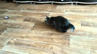 кошка Мона 6 месяцев