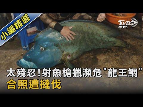 """太殘忍!射魚槍獵瀕危""""龍王鯛"""" 合照遭撻伐 TVBS新聞"""