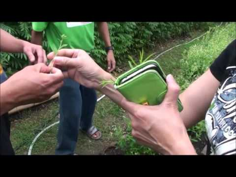Maribojoc Organic Demo Farm   Nov 2015   Bohol Pt2