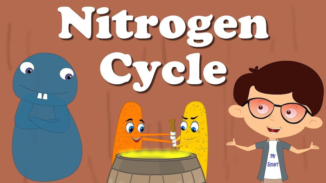 nitrogen cycle aumsum [ 1280 x 720 Pixel ]