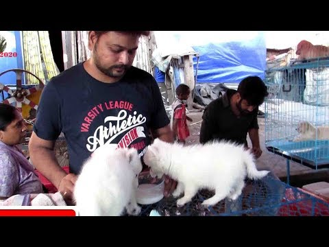 GALIFF STREET PET MARKET KOLKATA INDIA NOV VISIT   CUTE DOG PUPPY