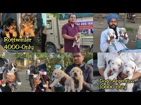 Cheapest Dog Market Outside Dog Show | Yamuna Nagar Dog Show 2020