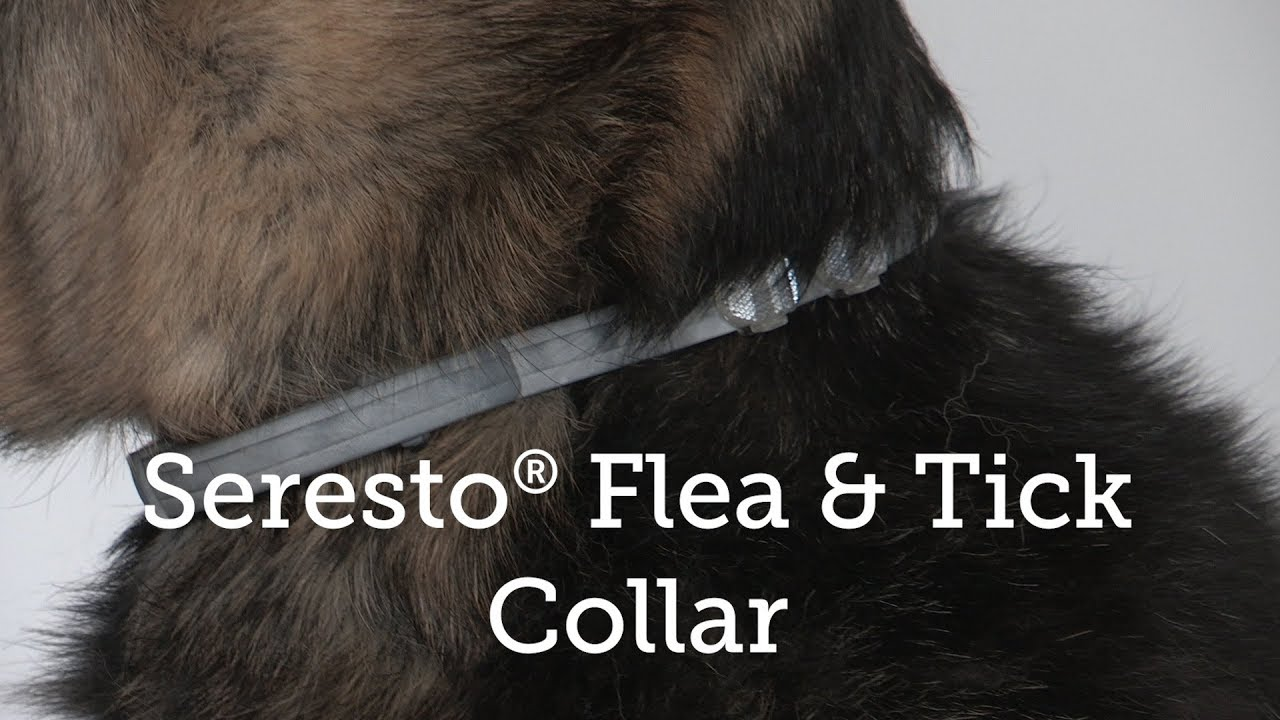Seresto® Flea and Tick Collar Review
