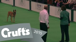 Inter-regional Obedience - Class C - Part 3 | Crufts 2015