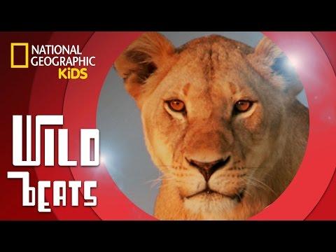 African Savanna (Music Video) feat. DJ Ecotone | WILD BEATS