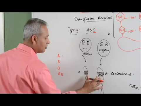 Blood Transfusion Reaction Part 1/3....