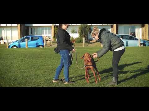Cooper - Vizsla - 4 Weeks Residential Dog Training