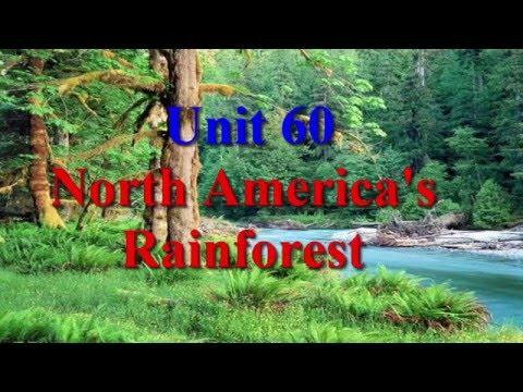 Unit 60 North America's Rainforest | Learn English Via Listening Level 4