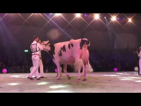 Swiss Expo 19: Holstein Championne