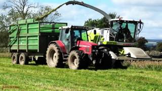 Whole-Crop Silage with Claas Jaguar Action.