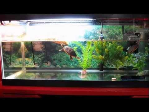 New UVB Lamp (turtle update) Reptisun 5.0 - YouTube