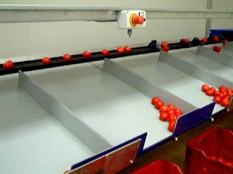 pomodoro semisecco -  linea di calibrazione automatica del pomodoro - www.davafood.it
