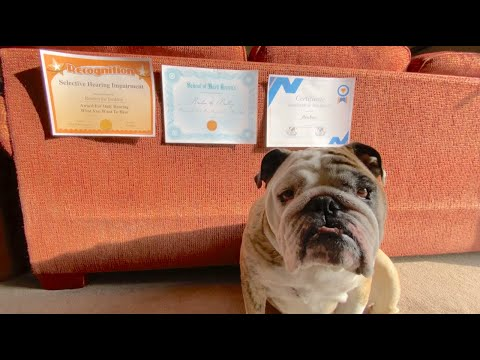 Reuben the Bulldog: Q&A Part 2