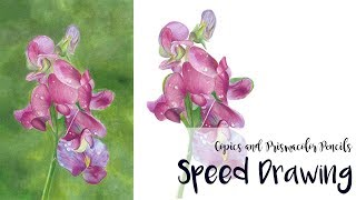 Sweet Pea Flower Drawing Speed Drawing Tutorial Time Lapse
