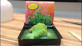 Crystal Growing Kit | Dollar Tree Science Kit