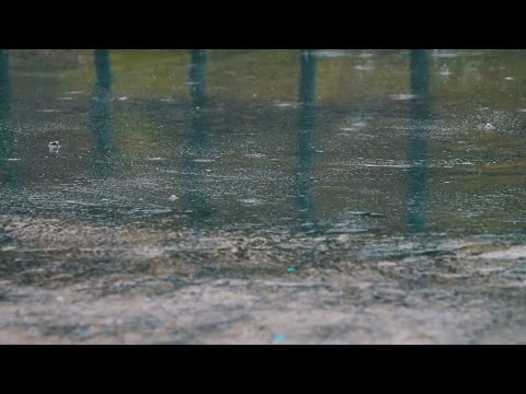 ☔️ Raining On Street Pavement Sounds For Sleeping, Relaxing ~ Water Drops Heavy Downpour Ambience