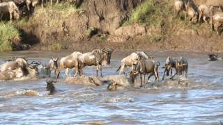 Magic of Tanzania - Crossing at the Mara River