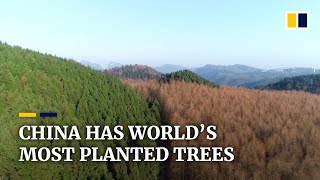 As China continues planting trees, 23% of the country is now covered in forest