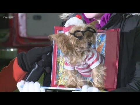 Dog transforms into 'Where's Waldo' for Spooky Pooch Parade in Lakewood