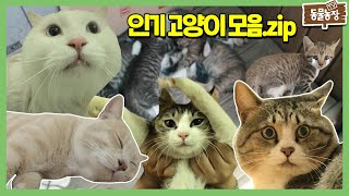 동물농장 ★인기 짱 고양이★ 고양이 최고야 고양이 사랑해 I TV동물농장 (Animal Farm) | SBS…