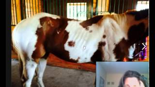 Is your Horse Ribby? What causes underweight in horses ?