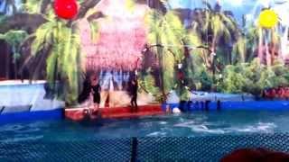Дельфинарий в Самаре... Шоу дельфинов...